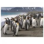 Puzzle  Dino-53283 Penguins