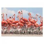 Puzzle   Flamingoes