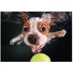 Puzzle   Puppy underwater