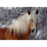 Dtoys-65933-HH01-(65933) Jigsaw Puzzle - 239 Pieces - Horses Magic : Haflinger I