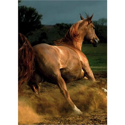 DToys-65940-MH04 Jigsaw Puzzle - 239 Pieces - Horses Magic : Arab IV