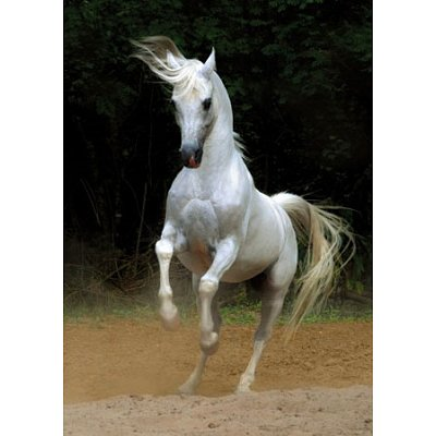 DToys-65988-PH01 Jigsaw Puzzle - 1000 Pieces - Horses :: White Horse