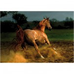 DToys-70388 Jigsaw Puzzle - 1000 Pieces - Horses : Beige Horse