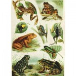 Puzzle  Dtoys-75703 Frogs