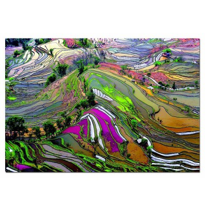 Educa-15156 Jigsaw Puzzle - 1000 Pieces - Rice Fields, China