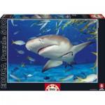 Puzzle  Educa-15972 Shark