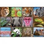 Puzzle  Educa-17656 Collage with Wild Animals