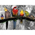 Puzzle  Educa-17984 Oiseaux dans la Jungle