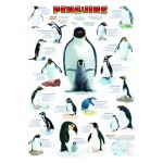 Eurographics-6000-0044 Jigsaw Puzzle - 1000 Pieces - Penguins