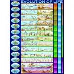 Puzzle  Eurographics-6000-0080 Evolution of life