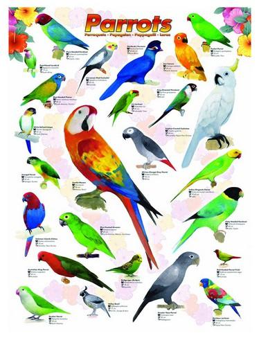 Eurographics-6000-0126 Jigsaw Puzzle - 1000 Pieces - Parrots