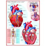 Puzzle  Eurographics-6000-0257 The Heart