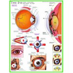 Eurographics-6000-0260 Jigsaw Puzzle - 1000 Pieces - The Eye