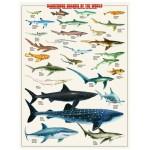 Puzzle  Eurographics-6000-0264