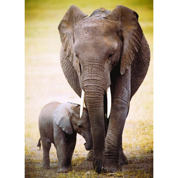 The Elephant and baby elephant