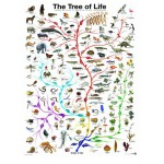 Puzzle  Eurographics-6000-0282 Evolution - the tree of life