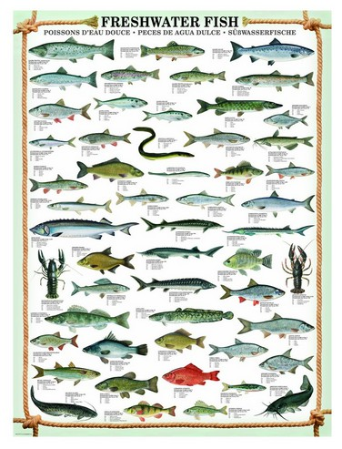Puzzle Eurographics-6000-0312 Fishes