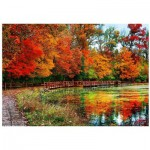 Puzzle  Eurographics-6000-0545 Sharon Forest