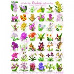 Puzzle  Eurographics-6000-0655 Orchids