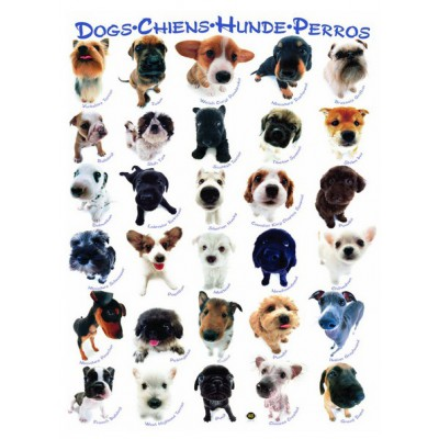 Puzzle Eurographics-6000-1510 Dogs