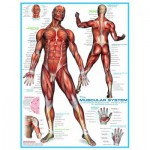 Puzzle  Eurographics-6000-2015 Muscular System
