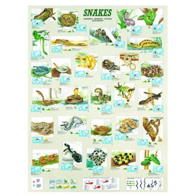 Puzzle Eurographics-6000-2610