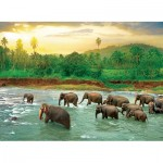 Puzzle  Eurographics-6000-5540 Save our Planet Collection - Rain Forest