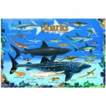 Puzzle  Eurographics-6100-0079 Sharks