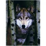 Puzzle  Eurographics-8000-1244 Wolf