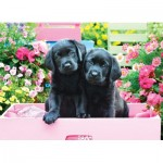 Puzzle   XXL Pieces - Black Labs in Pink Box