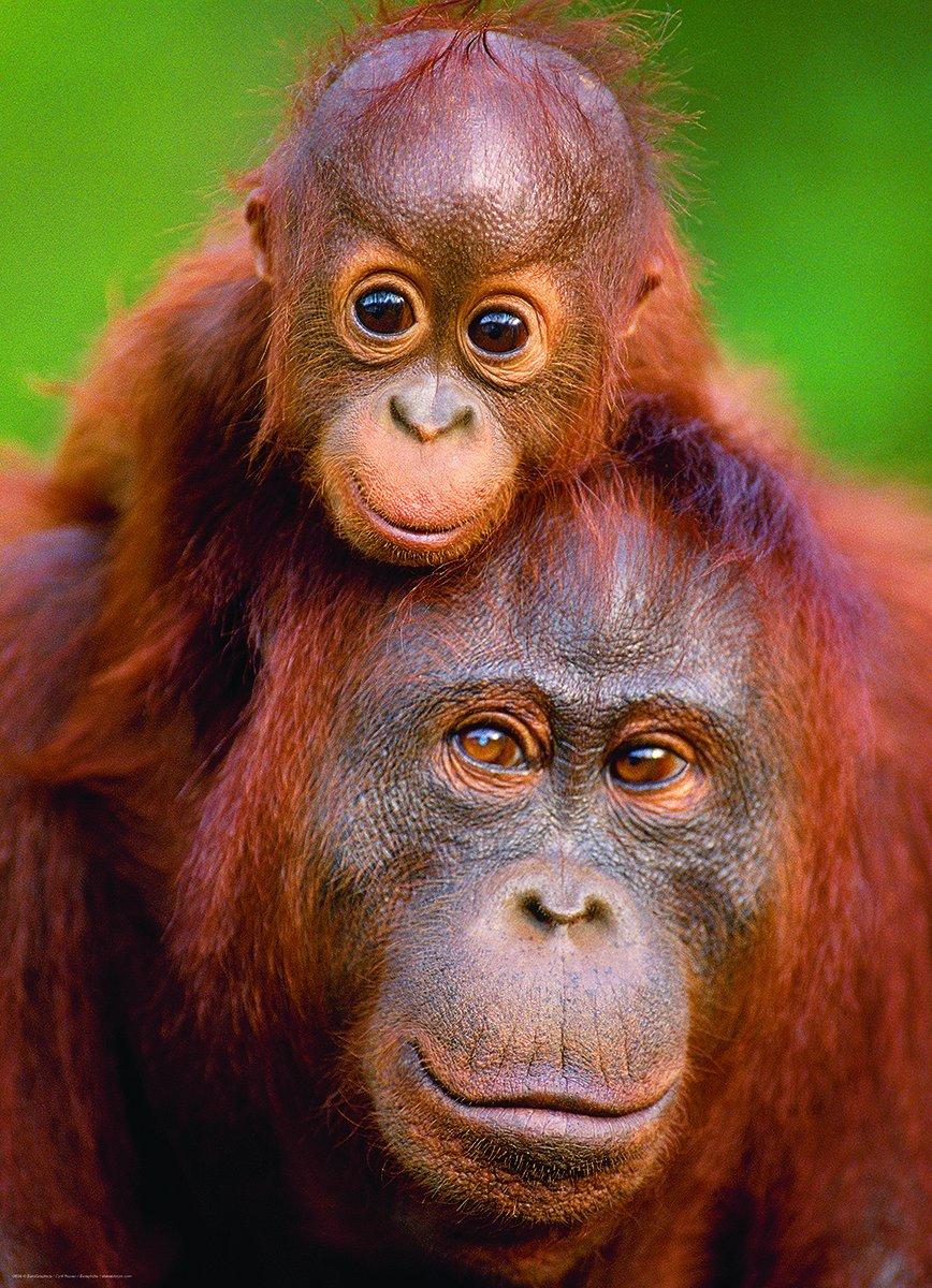 Puzzle Orangutan Amp Baby Eurographics 6000 0638 1000 Pieces