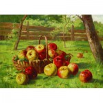 Puzzle  Gold-Puzzle-60768 Karl Vikas: Apple Harvest
