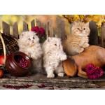 Puzzle  Grafika-Kids-00322 Magnetic Pieces - Persian kittens