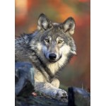 Puzzle  Grafika-Kids-00518 Magnetic Pieces - Wolf