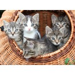 Puzzle  Grafika-Kids-00520 Kittens in a Basket