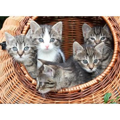 Puzzle Grafika-Kids-00520 Kittens in a Basket