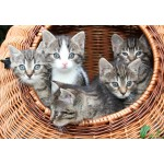 Puzzle  Grafika-Kids-00521 Kittens in a Basket