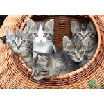 Puzzle  Grafika-Kids-00523 Magnetic Pieces - Kittens in a Basket