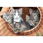 Puzzle  Grafika-Kids-00524 XXL Pieces - Kittens in a Basket