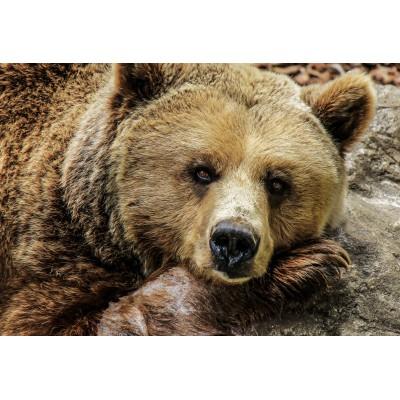 Puzzle Grafika-Kids-00593 XXL Pieces - Bear