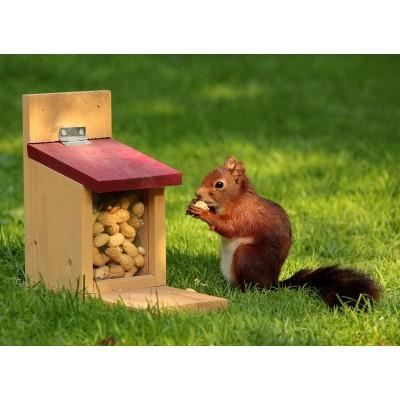 Puzzle Grafika-Kids-00650 Squirrel