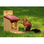 Puzzle  Grafika-Kids-00651 Squirrel
