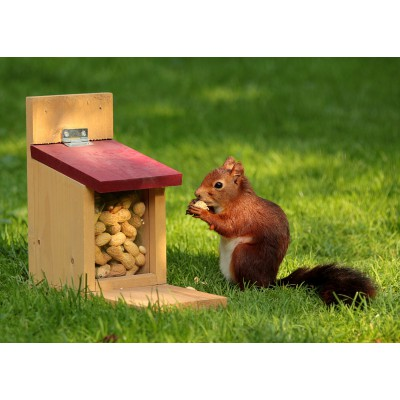 Puzzle Grafika-Kids-00652 Squirrel