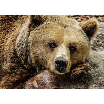 Puzzle Grafika-Kids-00660 Magnetic Pieces - Bear