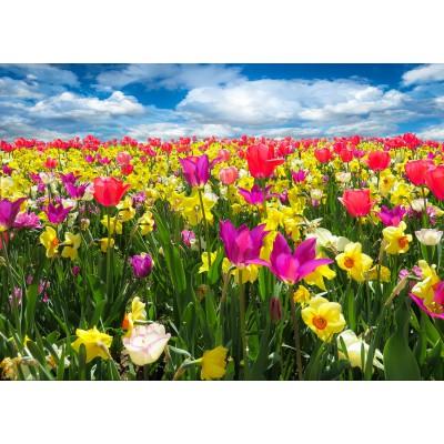 Puzzle Grafika-Kids-00683 Tulips