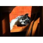 Puzzle  Grafika-Kids-00790 Kitten