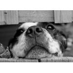 Puzzle  Grafika-Kids-00796 Magnetic Pieces - Dog