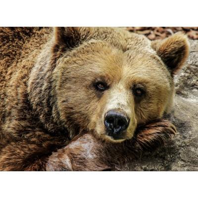 Puzzle Grafika-Kids-00798 Bear
