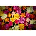 Puzzle  Grafika-Kids-00940 Roses