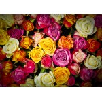 Puzzle  Grafika-Kids-00941 Roses
